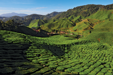 cameron-highlands