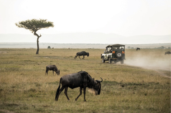 Which safari should you choose?